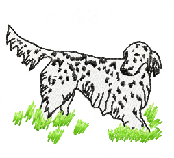 english setter in field