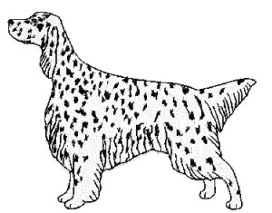 english setter stand