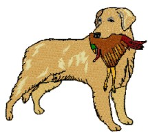 golde retriever with pheasant