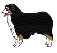 australian shepherd tri color