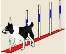border collie weave poles