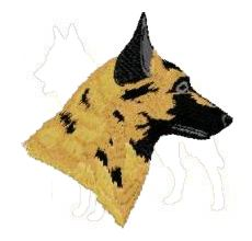 belgian malinois head
