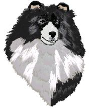 sheltie bi black head