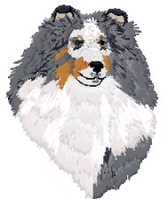 sheltie - blue merle - head study