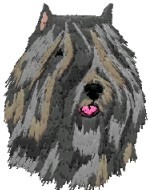 bouvier des flandres head