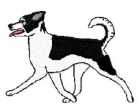 canaan dog gaiting