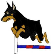 doberman in agility