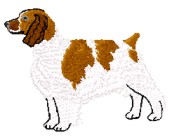 welsh springer
