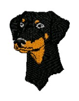 doberman head uncropped